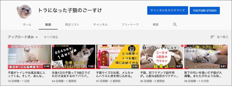 猫 youtube
