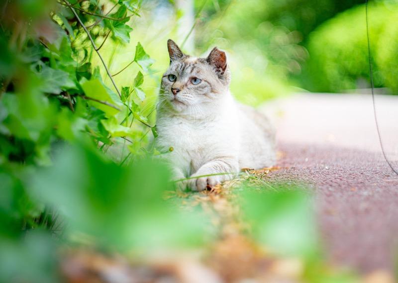 猫 おすすめ レンズ