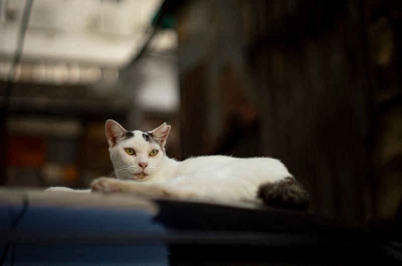 オールドレンズ 猫